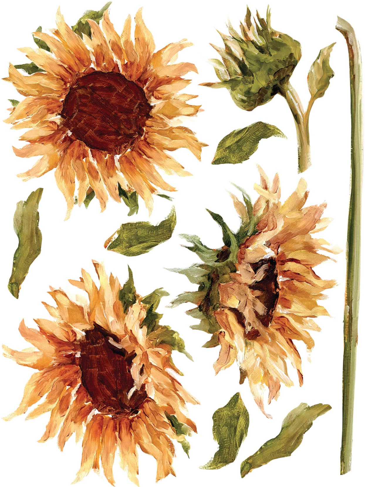 Rub on sunflower image for furniture transfers
